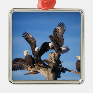 bald eagles, Haliaeetus leuccocephalus, Christmas Ornament