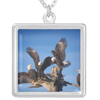 bald eagles, Haliaeetus leuccocephalus, Silver Plated Necklace