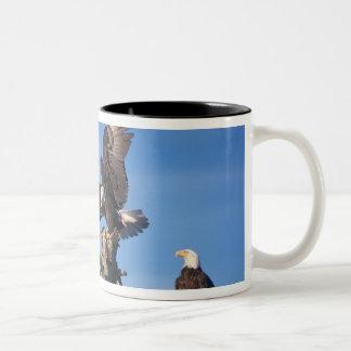 bald eagles, Haliaeetus leuccocephalus, Two-Tone Coffee Mug