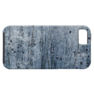 Bald Eagles (Haliaeetus leucocephalus) at the iPhone 5 Cases