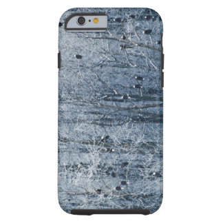 Bald Eagles (Haliaeetus leucocephalus) at the Tough iPhone 6 Case