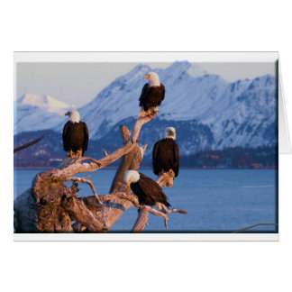 Bald Eagles Homer Alaska Greeting Card