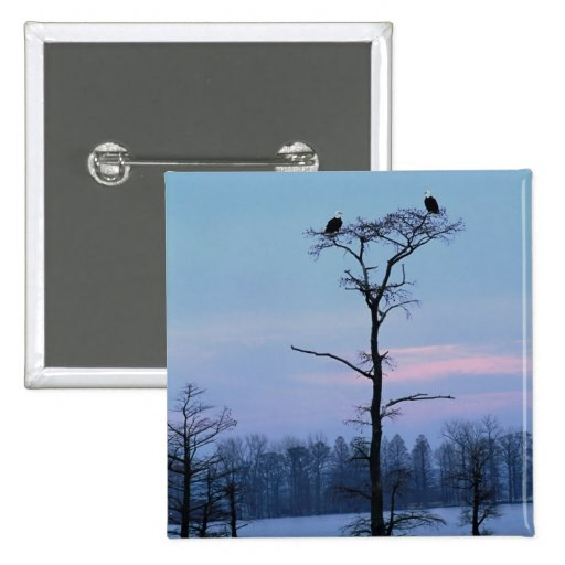 Bald eagles on top of a tree pinback button