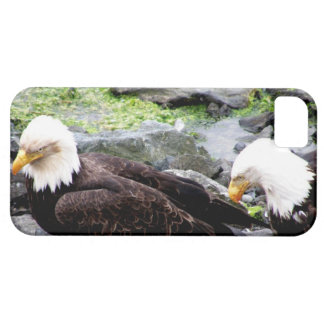 Bald Eagles  Share Meal on Haida Gwaii iphone5 Barely There iPhone 5 Case