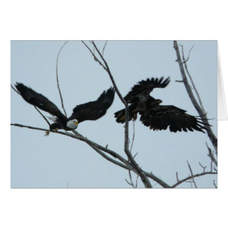 Bald Eagles taking flight Greeting Card