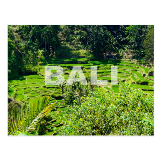 Bali Rice Terraces Postcard