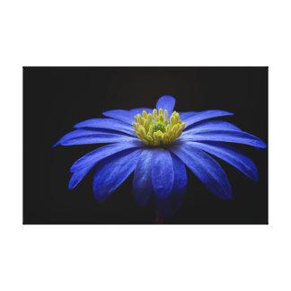 Balkan Anemone | Flower | Blossom Canvas Print