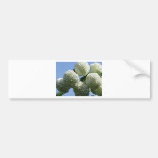 Balls of white hydrangea flowers against the sky bumper sticker