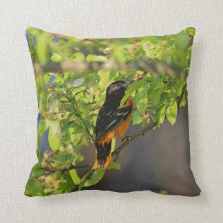 Baltimore oriole cushion