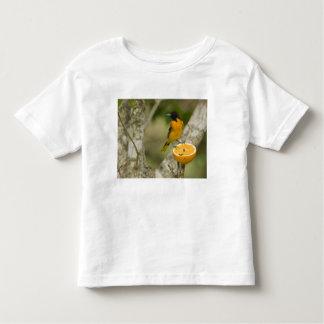 Baltimore Oriole feeding on orange, Icterus T-shirts