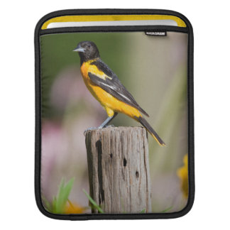 Baltimore Oriole female in flower garden iPad Sleeve