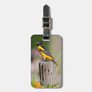 Baltimore Oriole female in flower garden Luggage Tag