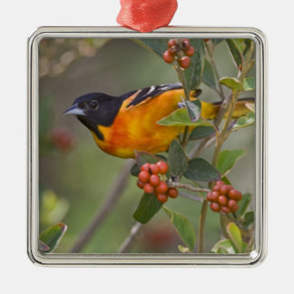 Baltimore Oriole Icterus galbula) adult male Christmas Ornament