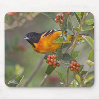 Baltimore Oriole Icterus galbula) adult male Mouse Mat