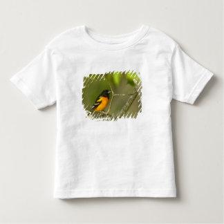 Baltimore Oriole, Icterus galbula, Coastal Toddler T-Shirt
