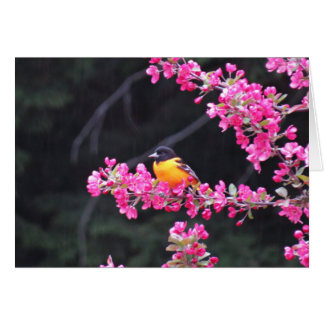 Baltimore Oriole in Crabapple Card