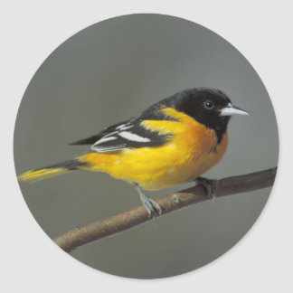 baltimore oriole stickers