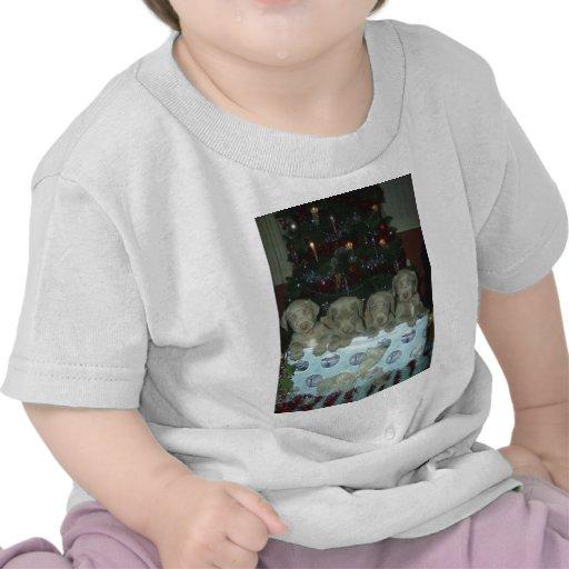 Bambi and Rockys Pups DOB 31 Oct 2009 003.jpg Tee Shirt