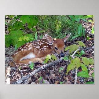 Bambie Deer Roe-deer Poster