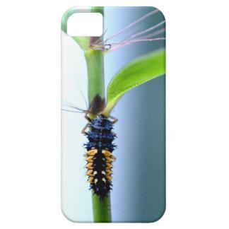 Bamboo beetle Bamboo nose macro iPhone 5 Cover