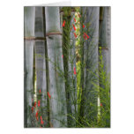 Bamboo & Flowers Greeting Card