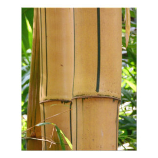 Bamboo Custom Flyer