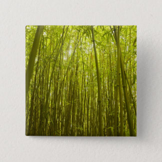 Bamboo Forest near Waikamoi Ridge Trail, North 15 Cm Square Badge