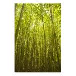 Bamboo Forest near Waikamoi Ridge Trail, North Photo Art