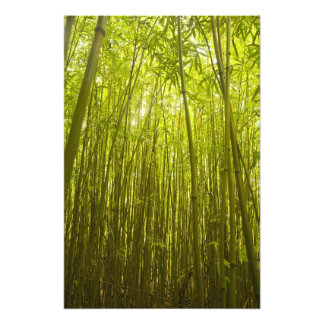 Bamboo Forest near Waikamoi Ridge Trail, North Photo Print