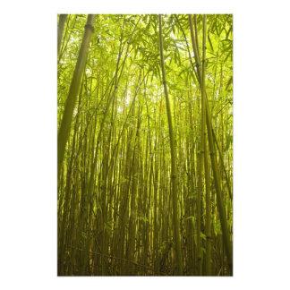 Bamboo Forest near Waikamoi Ridge Trail, North Photo Print