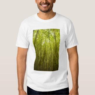 Bamboo Forest near Waikamoi Ridge Trail, North T Shirt