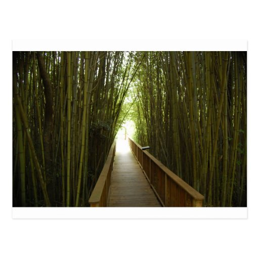Bamboo Forest  Trail Post Card