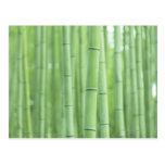 Bamboo Grove Postcard