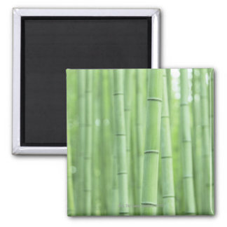 Bamboo Grove Square Magnet