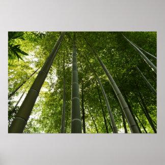Bamboo Grove: Tokyo, Japan Poster