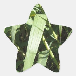 Bamboo Leaves Star Sticker