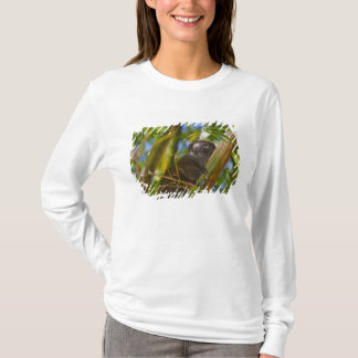 Bamboo lemur in the bamboo forest, Madagascar T-Shirt