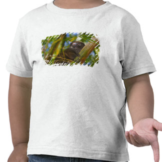Bamboo lemur in the bamboo forest, Madagascar Tee Shirt