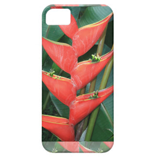 Bamboo Orchid Flower Costa Rica Gardens picnic fun iPhone 5 Cases