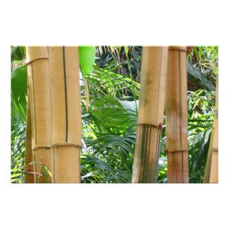 Bamboo Art Photo