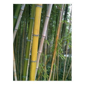 Bamboo Reeds Postcard
