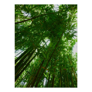 Bamboo Sky Poster