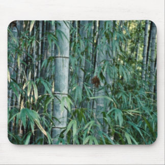 Bamboo trees, Kumamoto, Japan Mouse Pad
