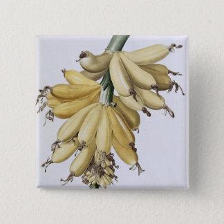 Banana, 1816 15 cm square badge