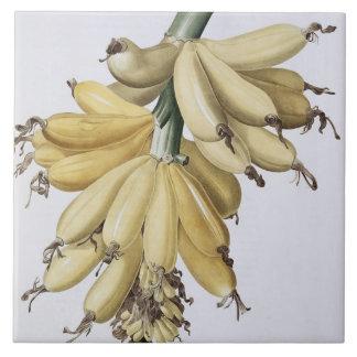Banana, 1816 large square tile