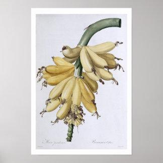 Banana, 1816 poster