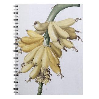 Banana, 1816 spiral note book