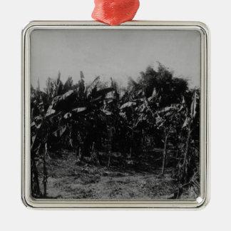 Banana Cultivation, Trinidad, c.1891 Christmas Ornament