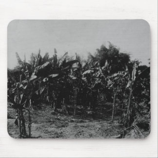 Banana Cultivation, Trinidad, c.1891 Mouse Mat