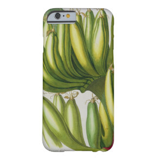 Banana, engraved by Johann Jakob Haid (1704-67) pl Barely There iPhone 6 Case